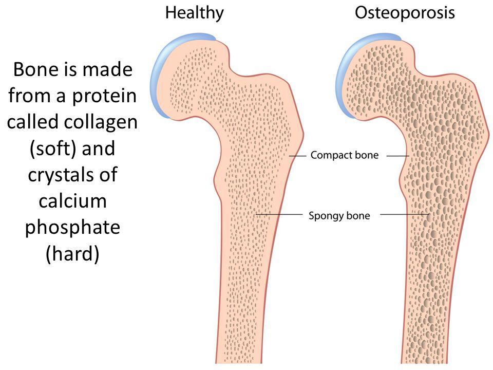 http://www.youtube.com/watch?v=C6u0u_59UDchttp://www.youtube.com/watch?v=C6u0u_59UDc – simple and basic information on the muscular system.