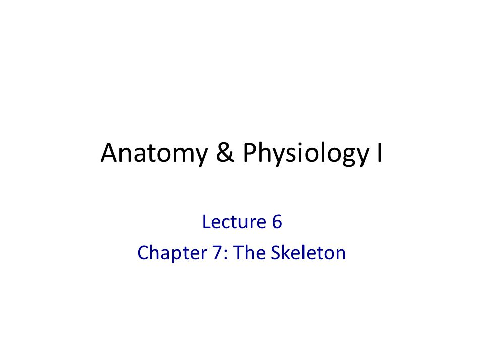 Anatomy & Physiology I Lecture 6 Chapter 7: The Skeleton