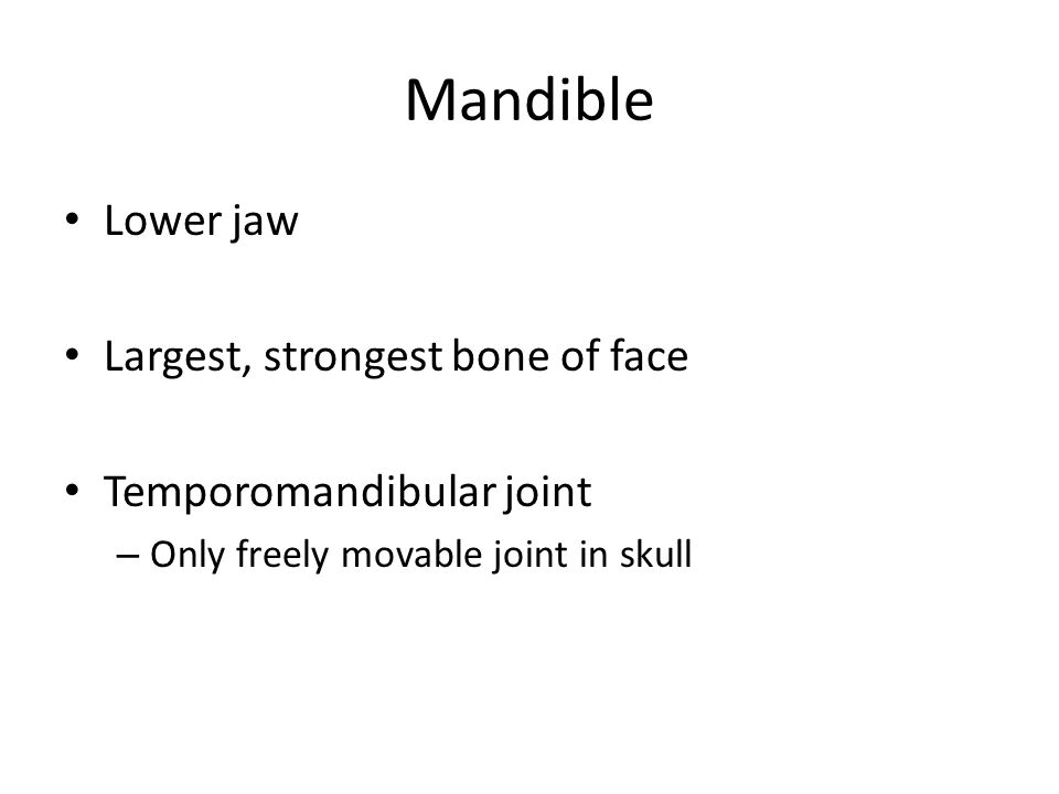 Mandible Lower jaw Largest, strongest bone of face Temporomandibular joint – Only freely movable joint in skull