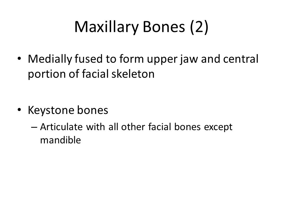 Maxillary Bones (2) Medially fused to form upper jaw and central portion of facial skeleton Keystone bones – Articulate with all other facial bones except mandible