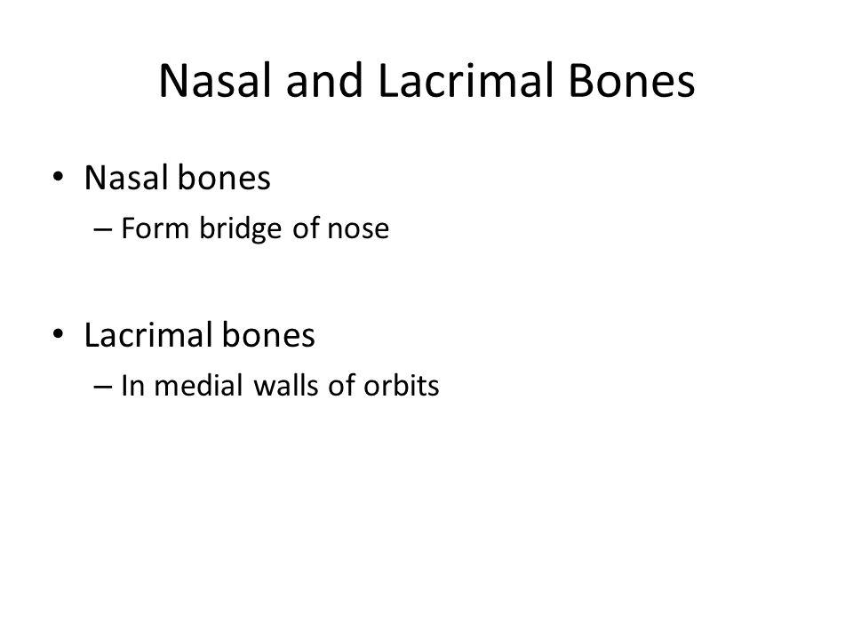 Nasal and Lacrimal Bones Nasal bones – Form bridge of nose Lacrimal bones – In medial walls of orbits