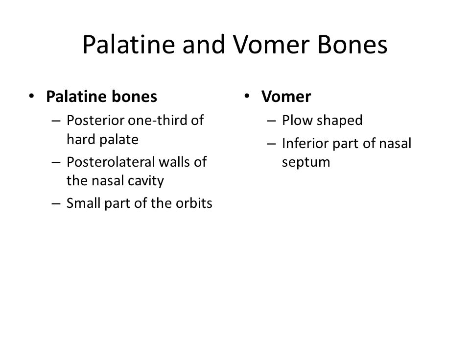 Palatine and Vomer Bones Palatine bones – Posterior one-third of hard palate – Posterolateral walls of the nasal cavity – Small part of the orbits Vomer – Plow shaped – Inferior part of nasal septum
