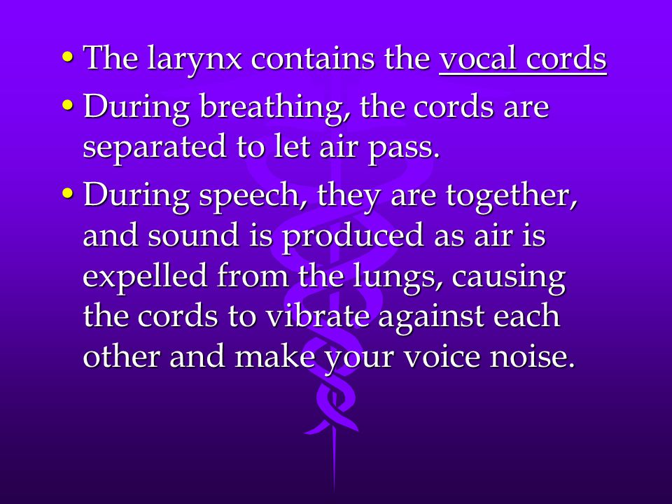 The larynx contains the vocal cordsThe larynx contains the vocal cords During breathing, the cords are separated to let air pass.During breathing, the