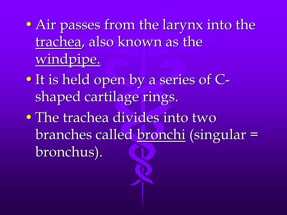 Air passes from the larynx into the trachea, also known as the windpipe.Air passes from the larynx into the trachea, also known as the windpipe. It is