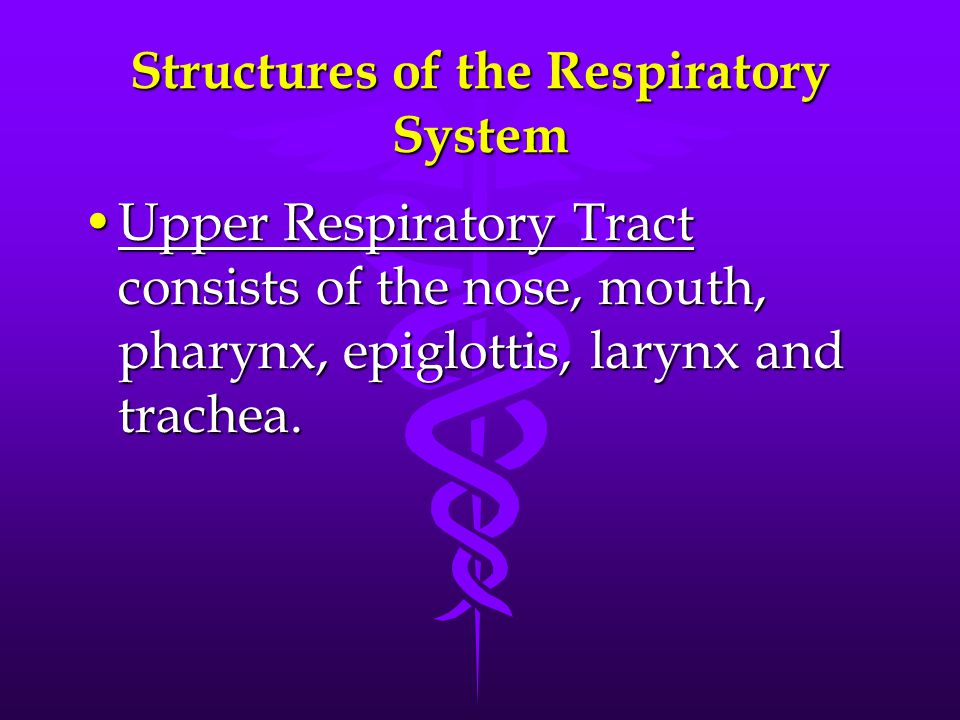 Structures of the Respiratory System Upper Respiratory Tract consists of the nose, mouth, pharynx, epiglottis, larynx and trachea.Upper Respiratory Tr
