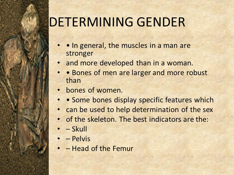 DETERMINING GENDER In general, the muscles in a man are stronger and more developed than in a woman.