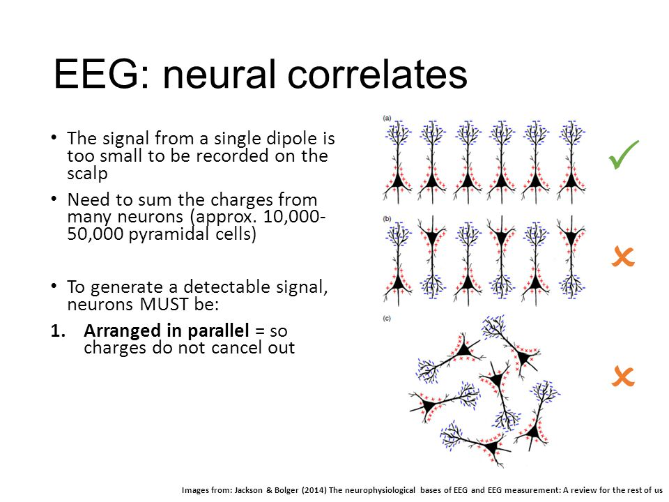 EEG: neural correlates The signal from a single dipole is too small to be recorded on the scalp Need to sum the charges from many neurons (approx. 10,
