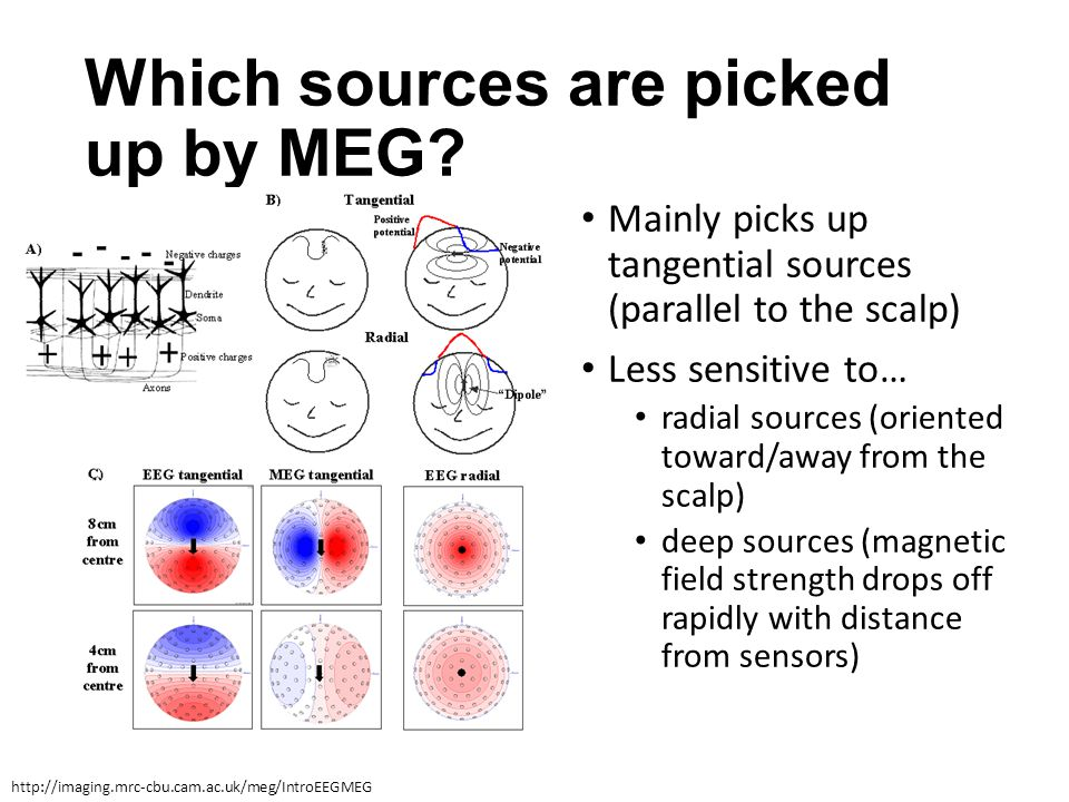 Which sources are picked up by MEG? Mainly picks up tangential sources (parallel to the scalp) Less sensitive to… radial sources (oriented toward/away