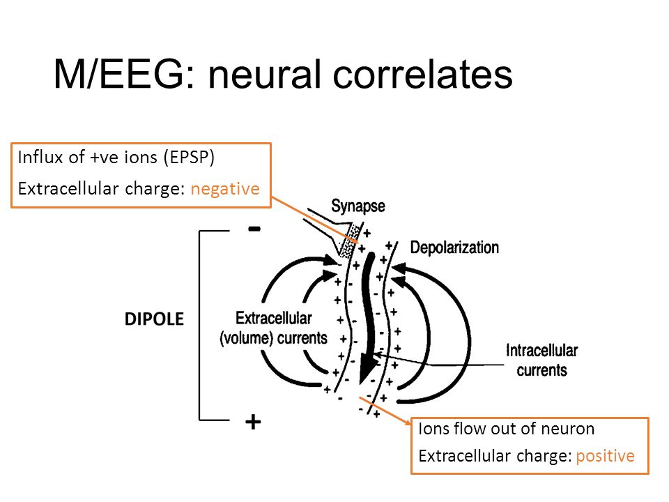 M/EEG: neural correlates Influx of +ve ions (EPSP) Extracellular charge: negative Ions flow out of neuron Extracellular charge: positive
