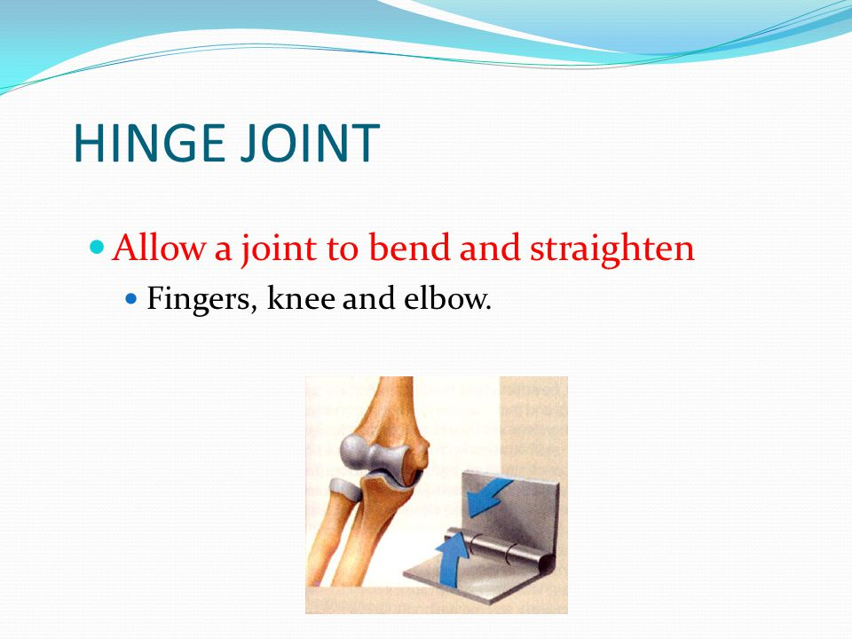 GLIDING JOINT Allow bones to slide over one another. Wrist Ankle