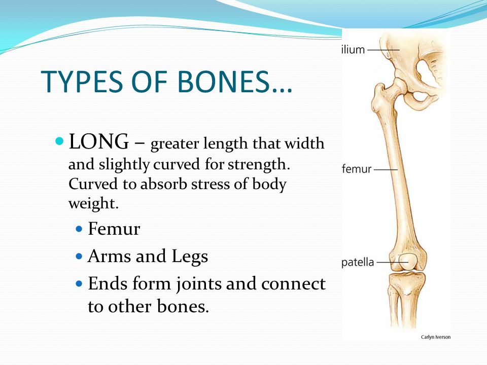 STRUCTURE APPENDICULAR SKELETON: includes the 126 bones of the shoulders, arms, hands, hips, legs, and feet. Main purpose is movement.