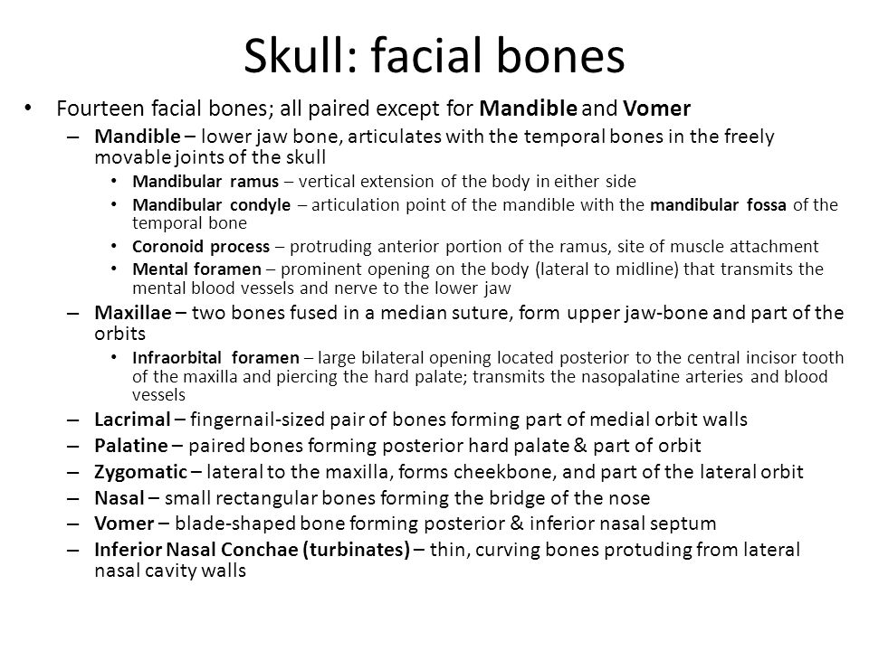 Skull: facial bones Fourteen facial bones; all paired except for Mandible and Vomer – Mandible – lower jaw bone, articulates with the temporal bones i