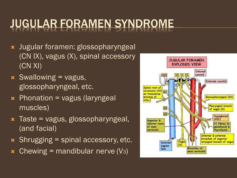  Jugular foramen: glossopharyngeal (CN IX), vagus (X), spinal accessory (CN XI)  Swallowing = vagus, glossopharyngeal, etc.  Phonation = vagus (lar