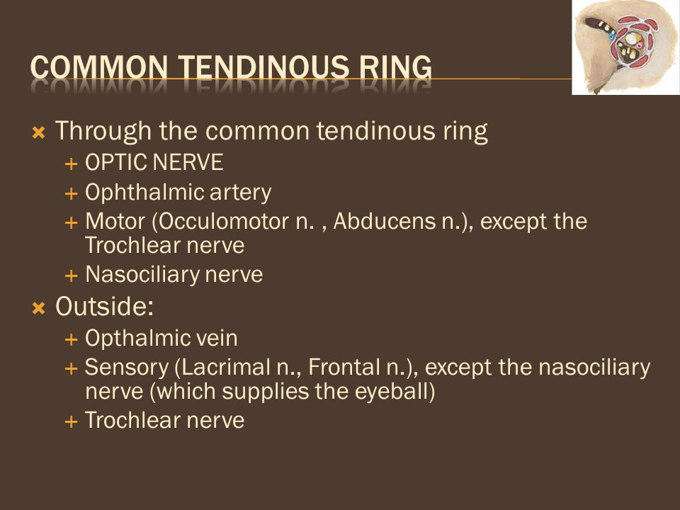  Through the common tendinous ring  OPTIC NERVE  Ophthalmic artery  Motor (Occulomotor n., Abducens n.), except the Trochlear nerve  Nasociliary