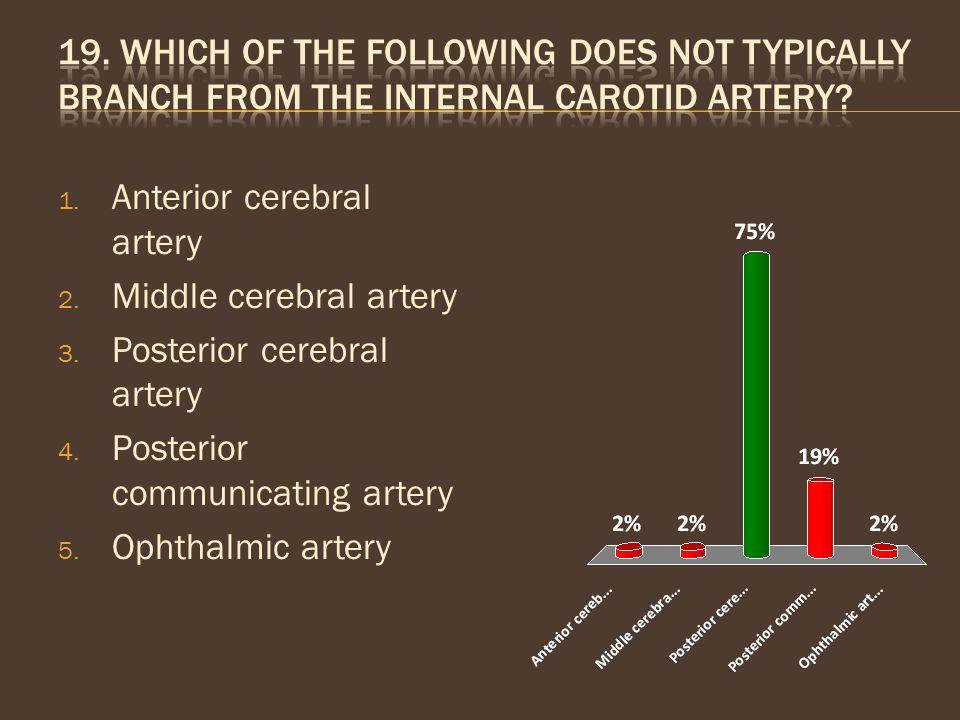 1. Anterior cerebral artery 2. Middle cerebral artery 3. Posterior cerebral artery 4. Posterior communicating artery 5. Ophthalmic artery