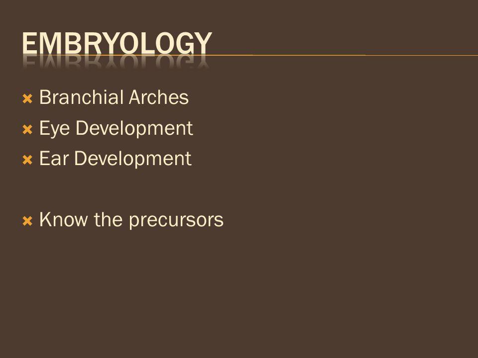  Branchial Arches  Eye Development  Ear Development  Know the precursors