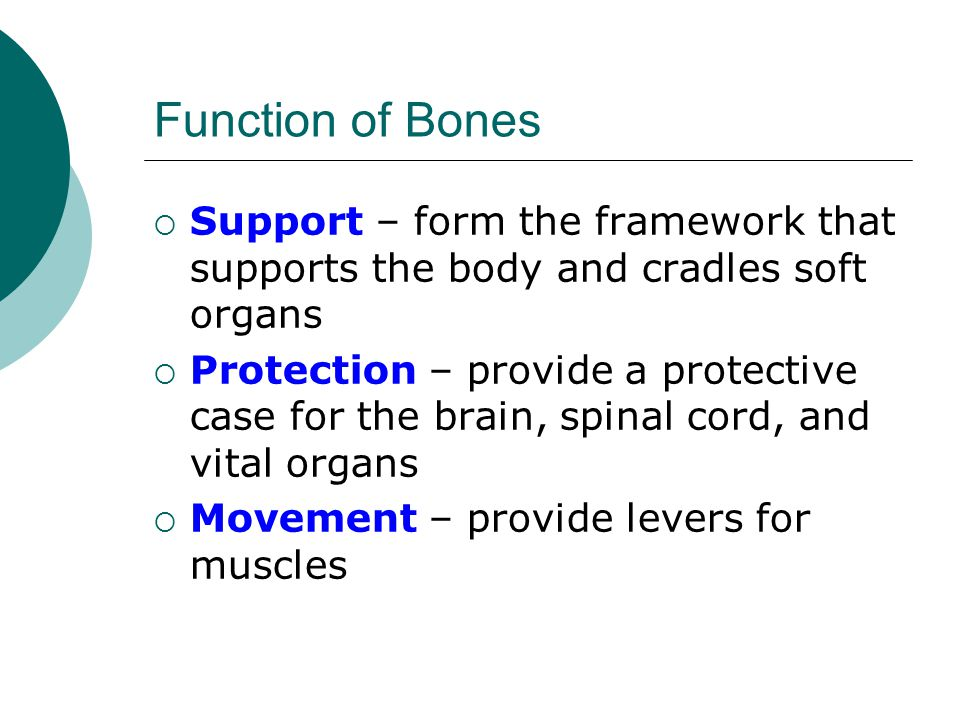 Function of Bones  Support – form the framework that supports the body and cradles soft organs  Protection – provide a protective case for the brain