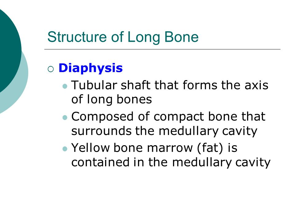 Structure of Long Bone  Diaphysis Tubular shaft that forms the axis of long bones Composed of compact bone that surrounds the medullary cavity Yellow