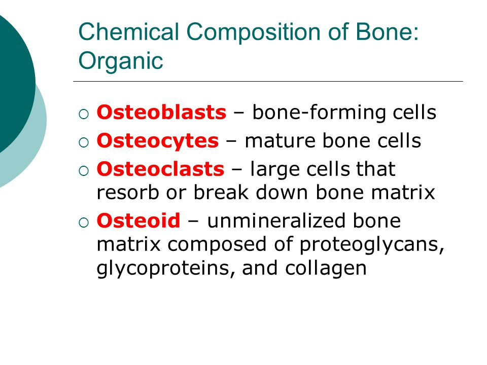 Chemical Composition of Bone: Organic  Osteoblasts – bone-forming cells  Osteocytes – mature bone cells  Osteoclasts – large cells that resorb or b
