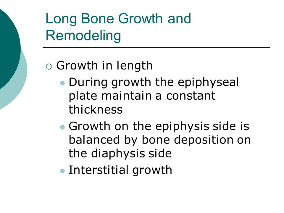 Long Bone Growth and Remodeling  Growth in length During growth the epiphyseal plate maintain a constant thickness Growth on the epiphysis side is ba