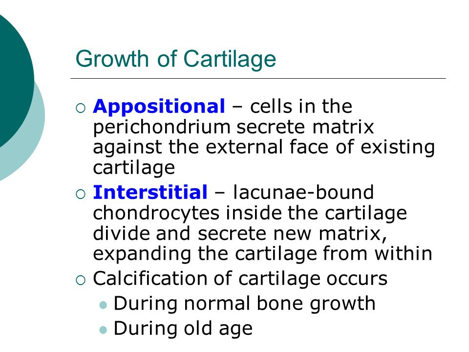 Growth of Cartilage  Appositional – cells in the perichondrium secrete matrix against the external face of existing cartilage  Interstitial – lacuna