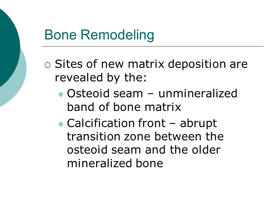 Bone Remodeling  Sites of new matrix deposition are revealed by the: Osteoid seam – unmineralized band of bone matrix Calcification front – abrupt tr