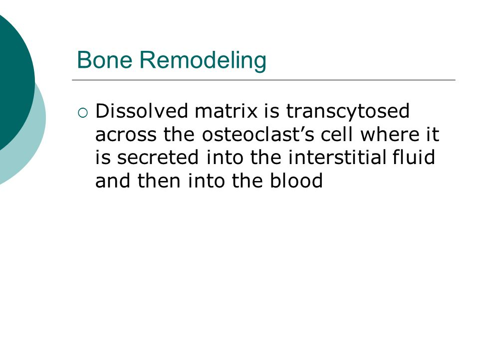 Bone Remodeling  Dissolved matrix is transcytosed across the osteoclast's cell where it is secreted into the interstitial fluid and then into the blo