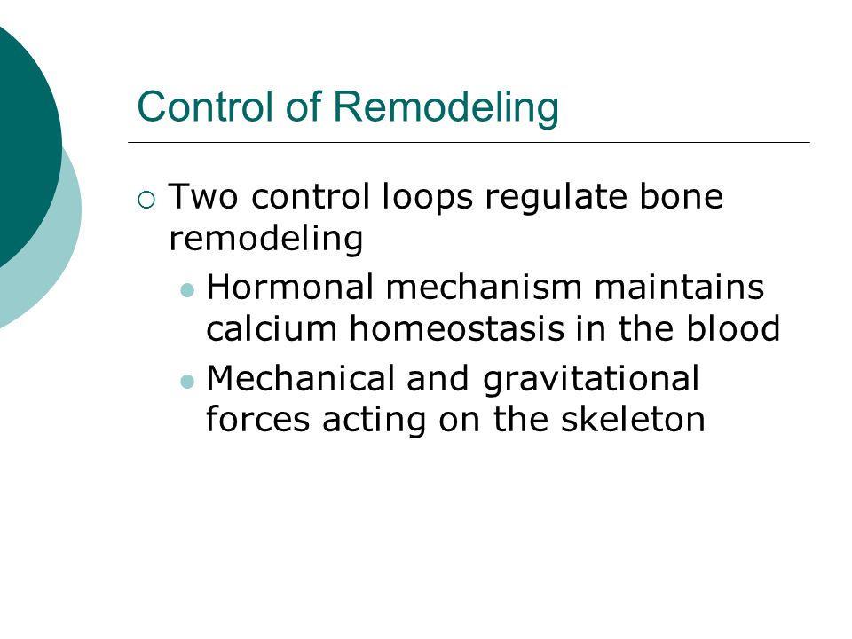 Control of Remodeling  Two control loops regulate bone remodeling Hormonal mechanism maintains calcium homeostasis in the blood Mechanical and gravit