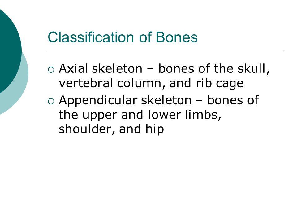 Classification of Bones  Axial skeleton – bones of the skull, vertebral column, and rib cage  Appendicular skeleton – bones of the upper and lower l
