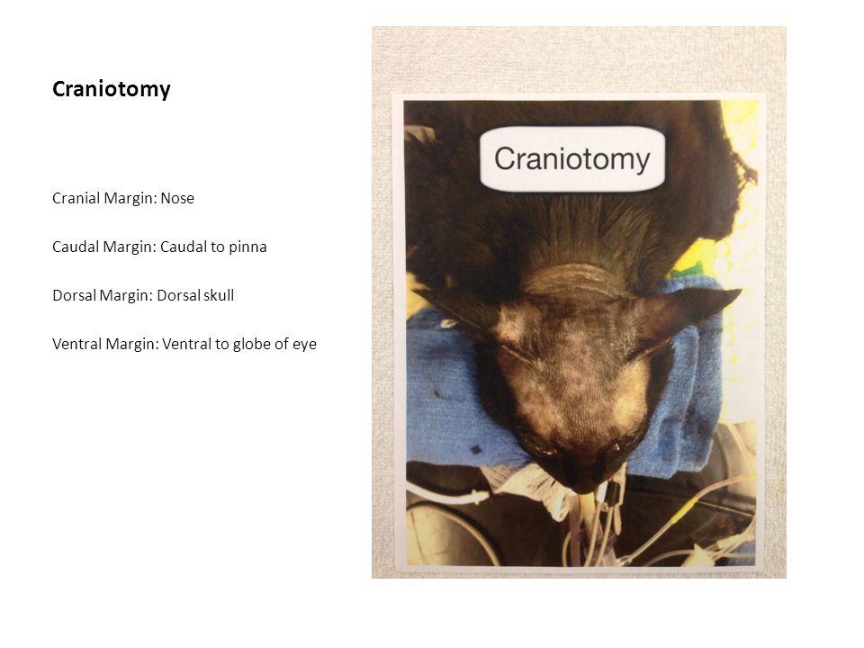 Parathyroidectomy Thyroidectomy Cranial Margin: Mid mandible Caudal Margin: Mid sternum Lateral Margin: Base of pinna/scapulo- humoral joint
