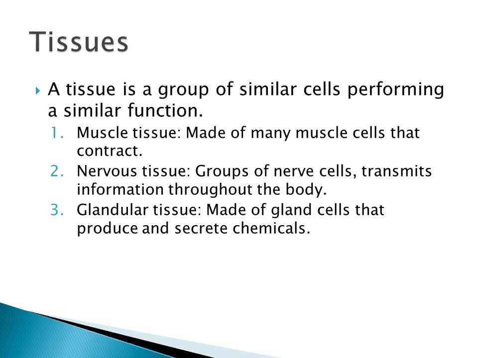  A tissue is a group of similar cells performing a similar function.