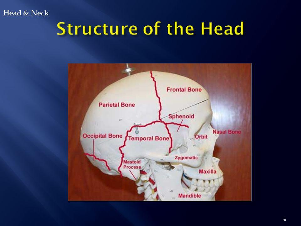  Skull  Hair  Scalp & Face  Neck  Nose  Ears  Hearing  Mouth & Pharynx  Eyes Head & Neck 5