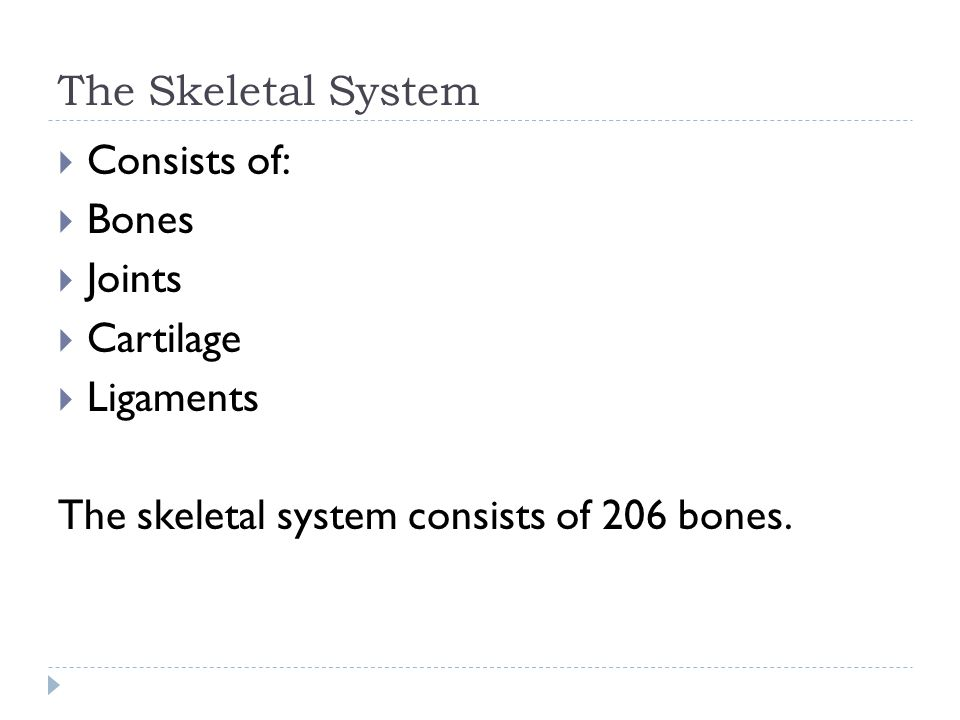 The Skeletal System  Functions:  Bones of the lower extremities support the weight of the body.