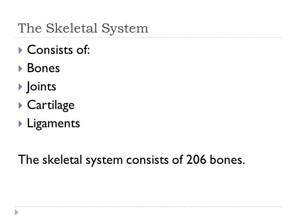  Consists of:  Bones  Joints  Cartilage  Ligaments The skeletal system consists of 206 bones.