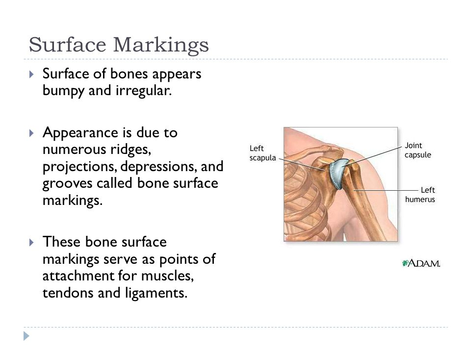 Surface Markings  Surface of bones appears bumpy and irregular.