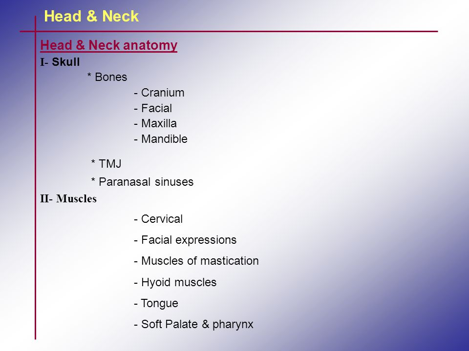 Head & Neck Muscles of the Tongue: 1.Genioglossus muscles: depresses & protrudes the tongue.