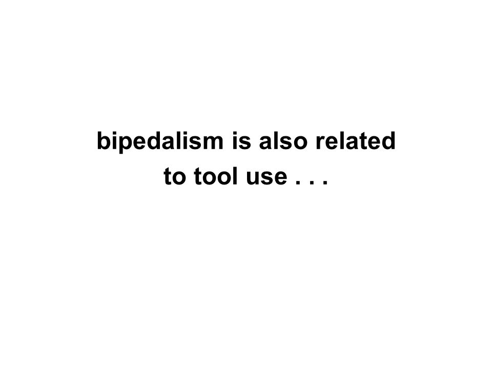 bipedalism is also related to tool use...