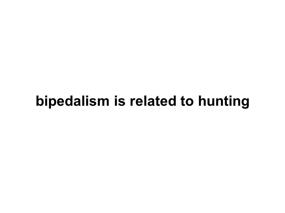 bipedalism is related to hunting
