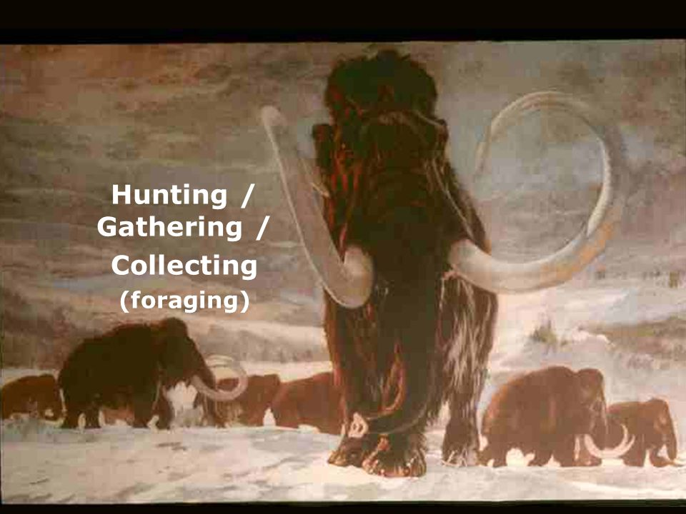 Hunting / Gathering / Collecting (foraging)