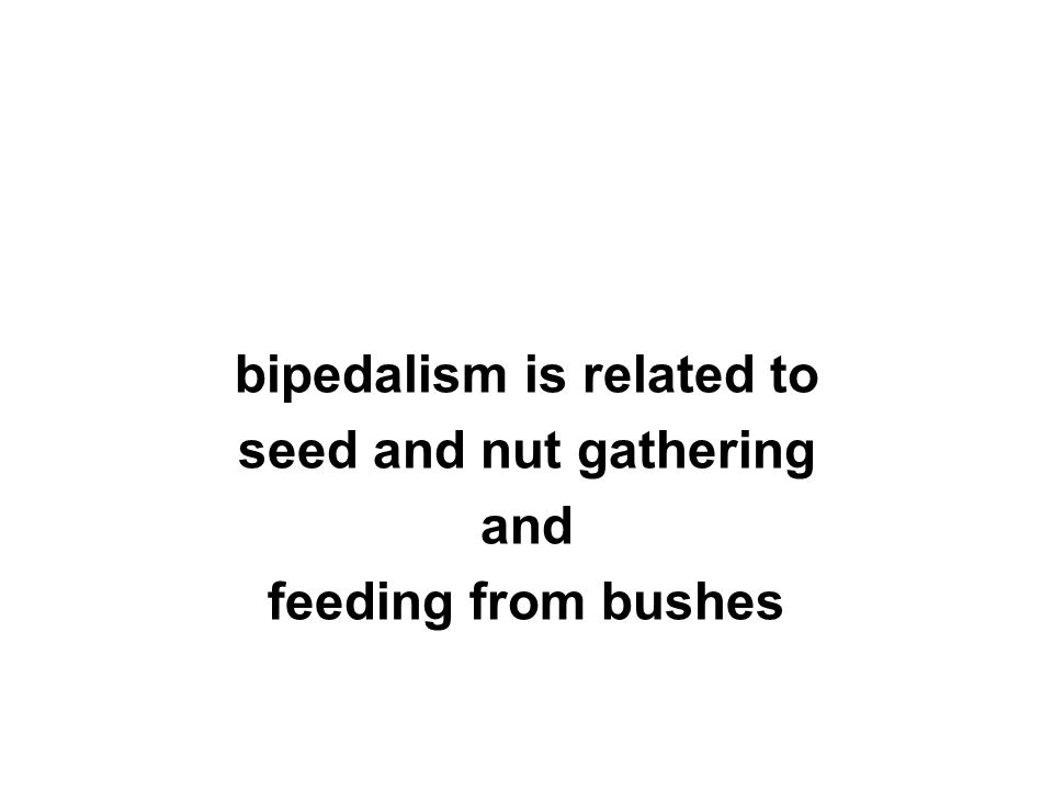 bipedalism is related to seed and nut gathering and feeding from bushes