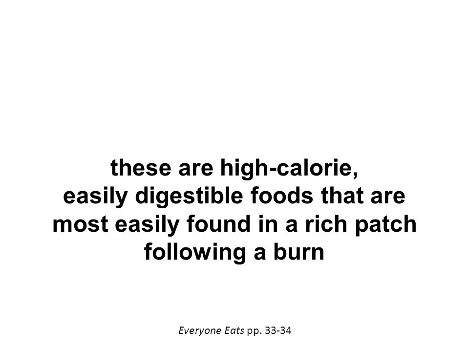these are high-calorie, easily digestible foods that are most easily found in a rich patch following a burn Everyone Eats pp.