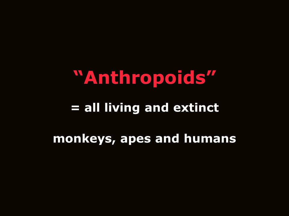 Anthropoids = all living and extinct monkeys, apes and humans