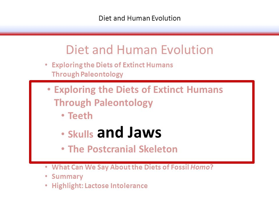 Exploring the Diets of Extinct Humans Through Paleontology Teeth Skulls and Jaws The Postcranial Skeleton What Is Adaptation.