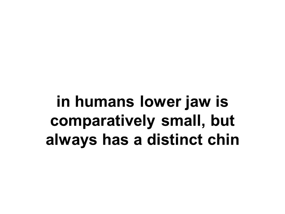 in humans lower jaw is comparatively small, but always has a distinct chin