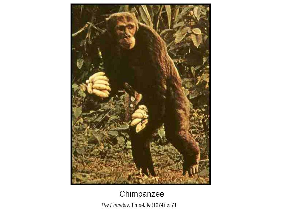 Chimpanzee The Primates, Time-Life (1974) p. 71
