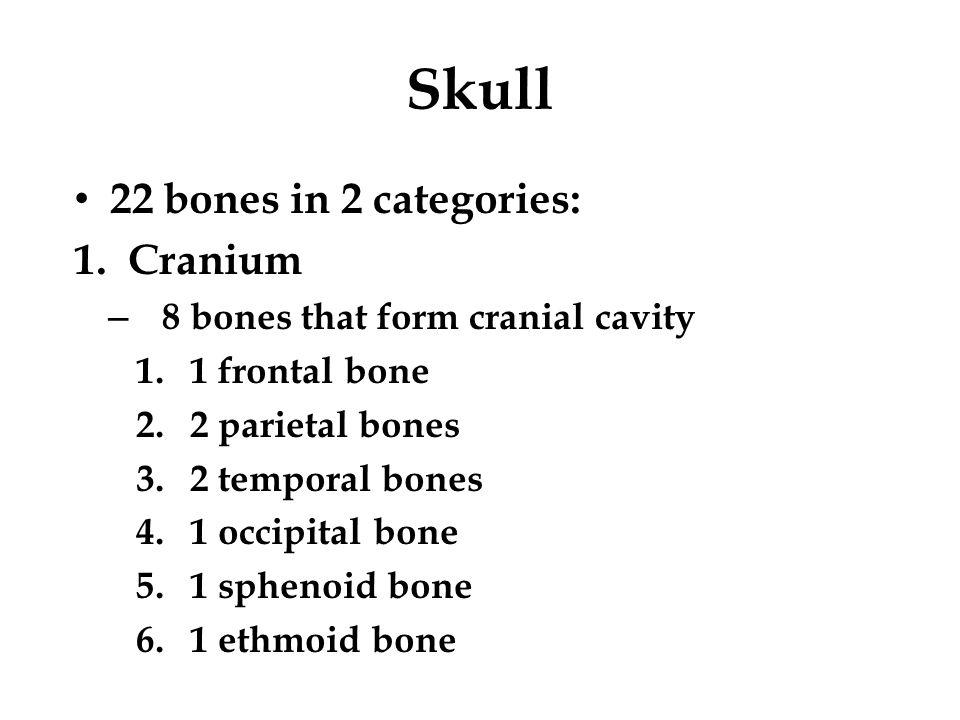 Skull 22 bones in 2 categories: 1.Cranium – 8 bones that form cranial cavity 1.1 frontal bone 2.2 parietal bones 3.2 temporal bones 4.1 occipital bone