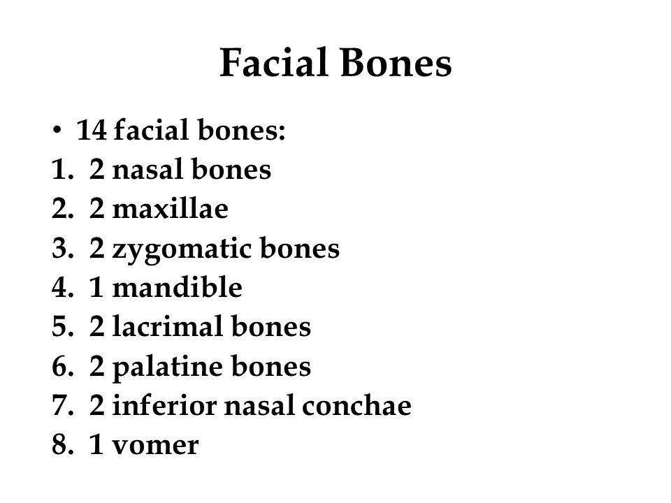 Facial Bones 14 facial bones: 1.2 nasal bones 2.2 maxillae 3.2 zygomatic bones 4.1 mandible 5.2 lacrimal bones 6.2 palatine bones 7.2 inferior nasal c