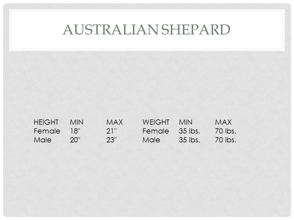 COCKER SPANIEL HEIGHTMINMAXWEIGHTMINMAX Female13 14.5 Female22 lbs.28 lbs.