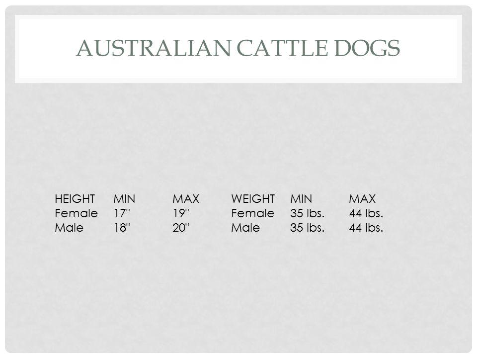 DALMATIAN HEIGHTMINMAXWEIGHTMINMAX Female22 23 Female50 lbs.55 lbs. Male23 24 Male50 lbs.55 lbs.