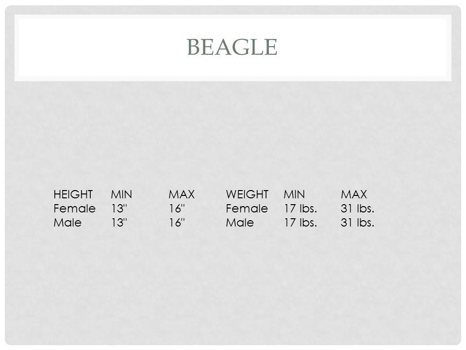 GREYHOUND HEIGHTMINMAXWEIGHTMINMAX Female26.5 28 Female59 lbs.66 lbs.